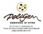 POLIGEN Embriões in Vitro